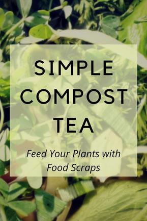 Simple Compost Tea for the Garden