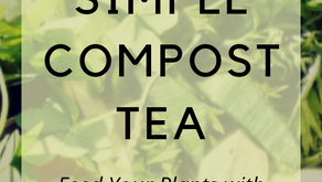Simple Compost Tea for the Garden