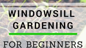 Beginner's Guide to Windowsill Gardening