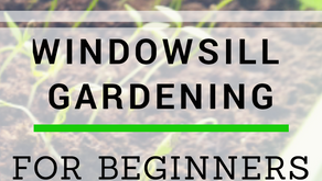 Beginner's Guide to Windowsill Gardening