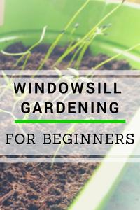 Windowsill Gardening For Beginners