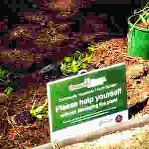 Groundswell Community Veggie Verge