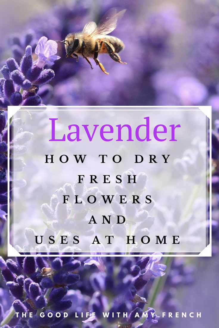 How to Dry Fresh Lavender and Uses Around The Home