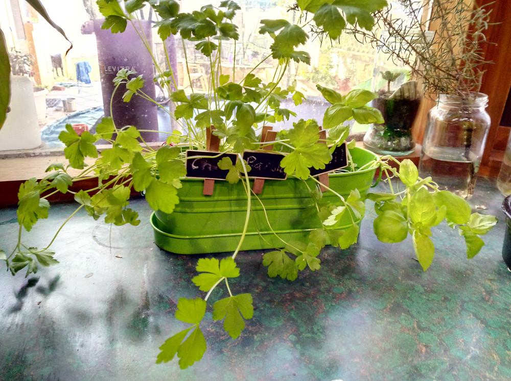 plastic free herbs