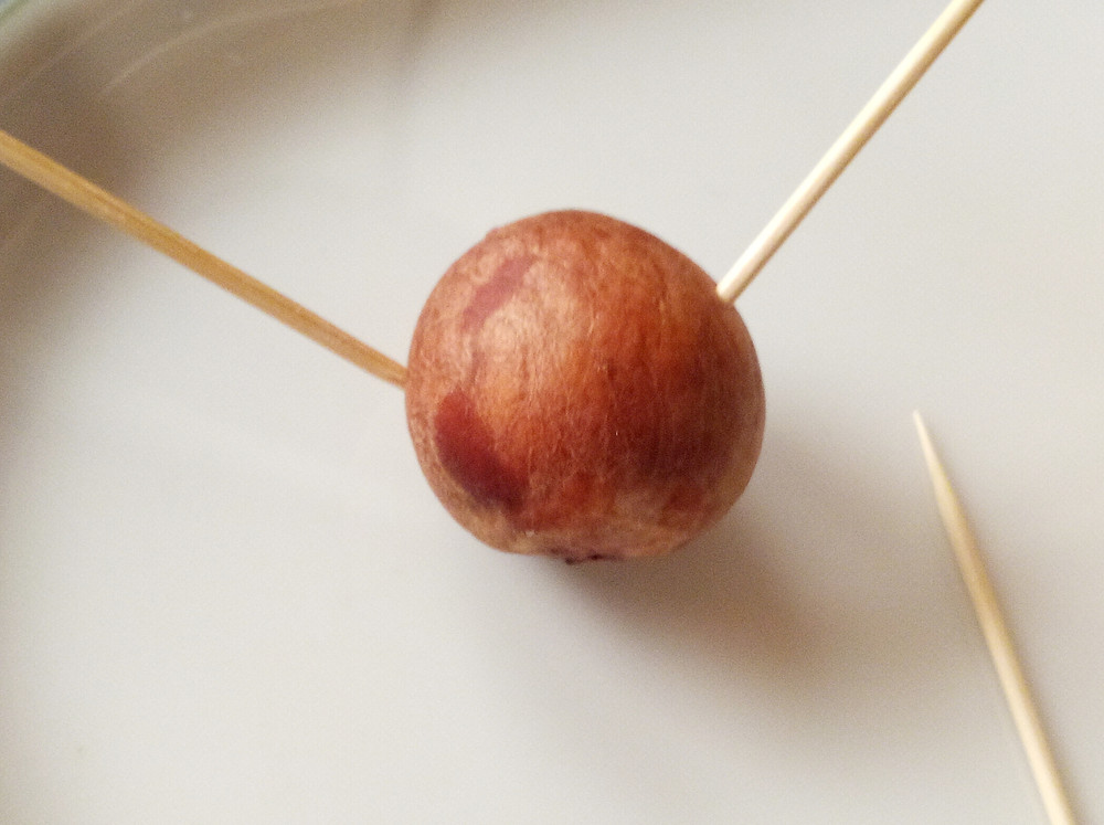 Supporting your avocado seed with toothpicks