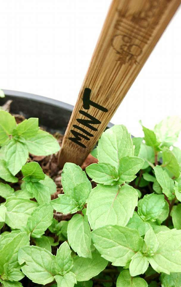 Repurpose Your Bamboo Toothbrush into a Plant Marker