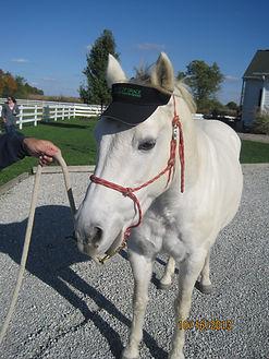 Horse Wearing Visor