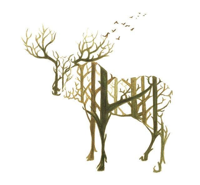 Forest in moose in forest . Aafke de Jong