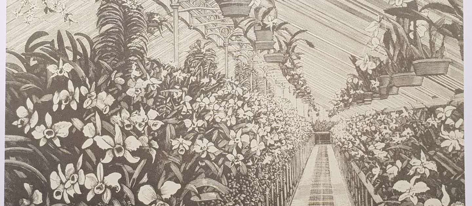 Victorian Orchid Culture