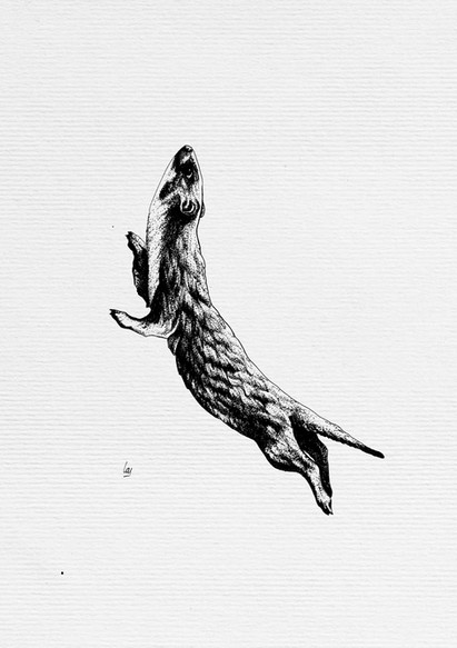Otter, Stoat, Weasel?!