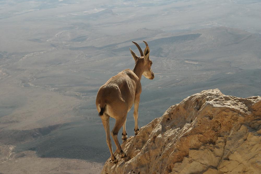 I'm Like a Goat on The Edge!