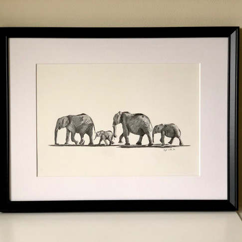 A family of Elephants