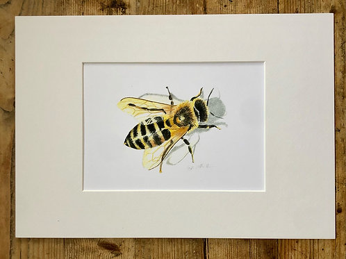 The Shadow of the Honey bee fine art print