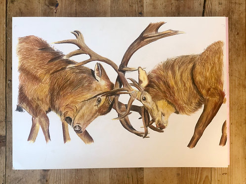 Majestic Rutting Stags Original