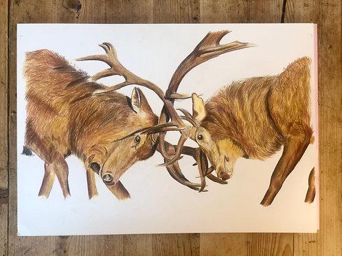 Majestic Rutting Stags Fine Art Print