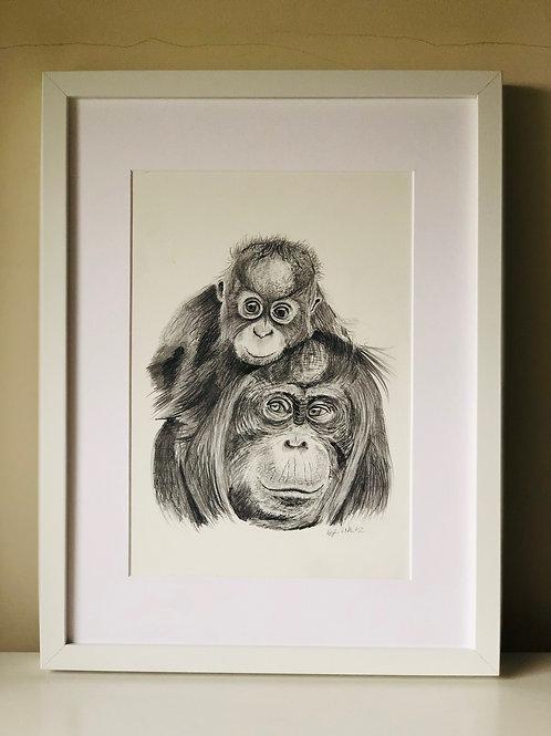 High Quality Print: 'On Top of the World' Orangutan