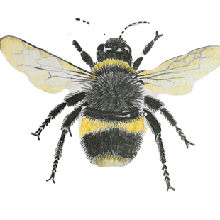 The Beauty of Bees