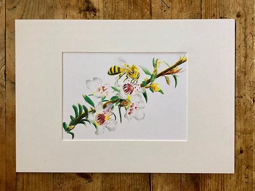 The Dance of the Manuka bee fine art print