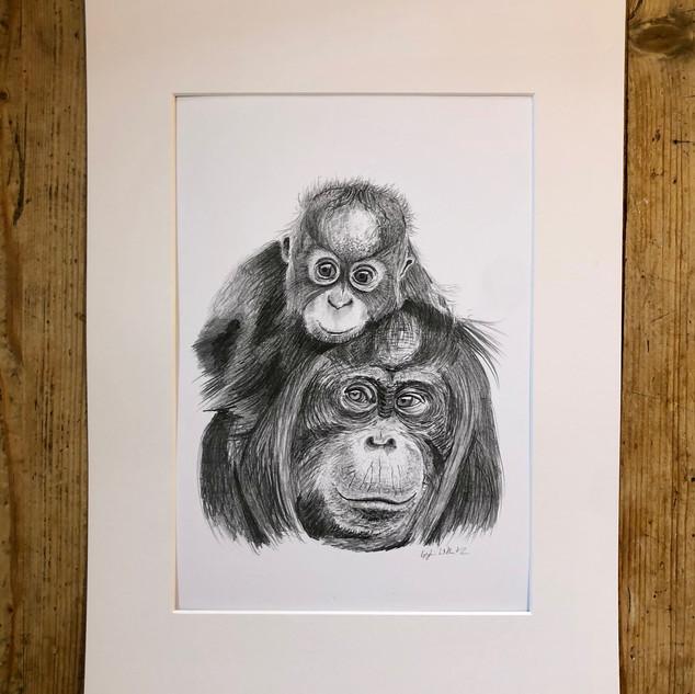 orangutans.jpg