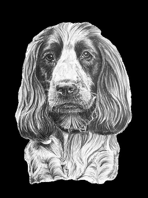 A bespoke pet, person or car portrait