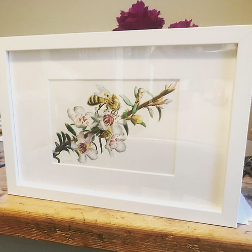 High Quality Print: The Dance of the Manuka bee