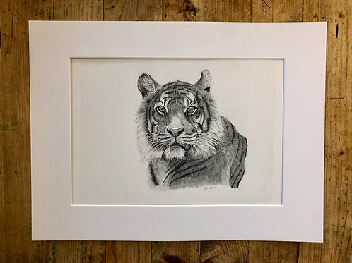 Original illustration Benji the Bengal Tiger(1 of 1)