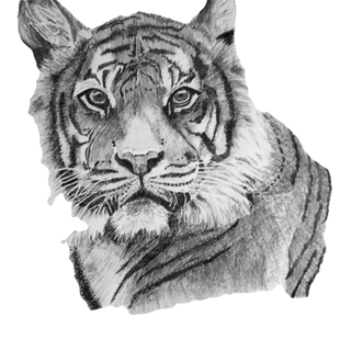 Benji the Bengal Tiger
