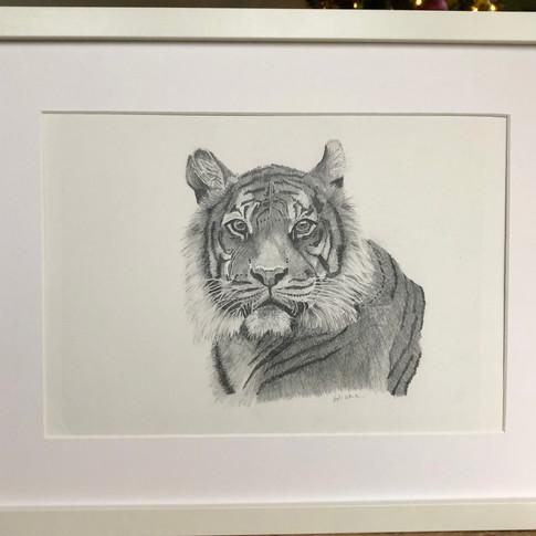 Benji the tiger