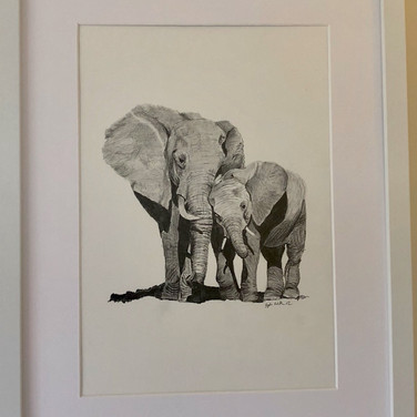 Elephants - A mother's love