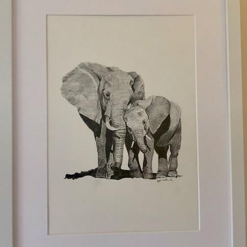 Elephants - A mother's love