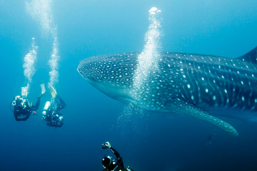 divers-and-whale-shark-110050253-591059d