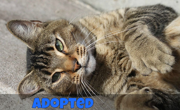 Adopted - Thumbs.jpg