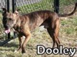 Dooley 150672.jpg