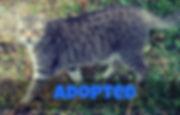 Adopted - Tinker.jpg