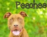 Peaches 151078.jpg