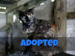 Adopted - Bambi.jpg