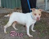 Roxy 149327.jpg