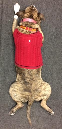 Toozdae KKVV Mascot Dog