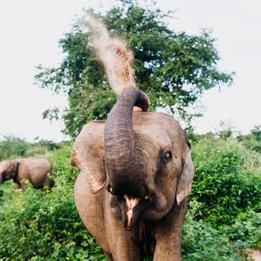 Reisblog Sri Lanka