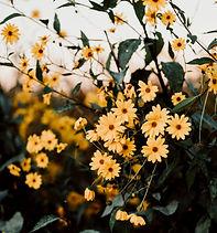 MarloesNiemeijerFotografie-317.jpg