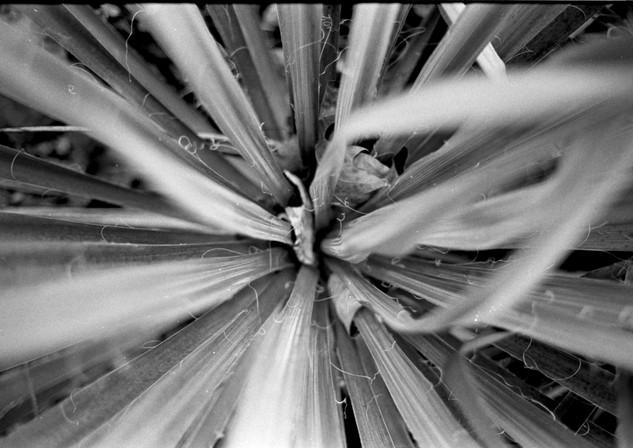 Plants on Film