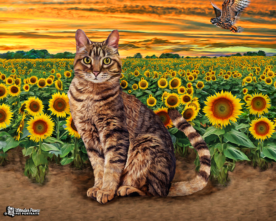 SunflowerFields8x10_Neko_web