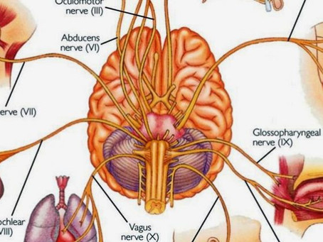 Short list of how to engage your vagus nerve - the calming part of your nervous system.