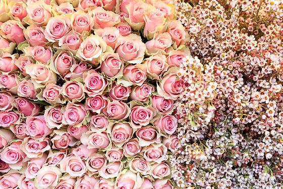 rose_pink.jpg