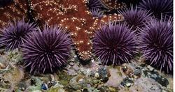 Desert Urchins photo inspiration 2