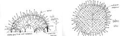 Desert Urchins Sketch11