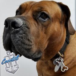 DogPics-Norman.jpg