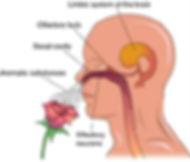 Amy's-Body-Therapy-www.amysbodytherapy.com-essential-oils-Woburn-MA