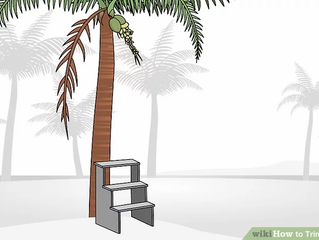 How to Trim a Palm Tree
