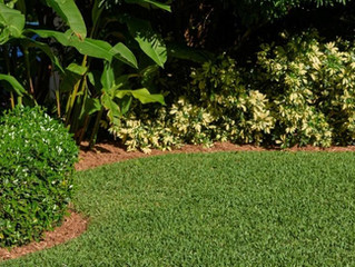 When & How to Plant & Grow St. Augustine Grass